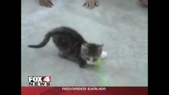 ADORABLE! 2 Legged Kitten - Amazing Grace