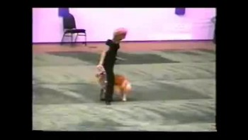 Amazing Dog talent show