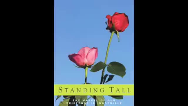 Standing Tall - Donna Lancaster