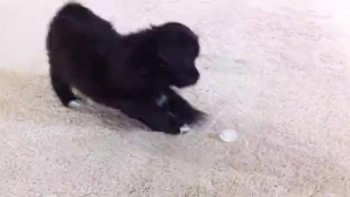 Puppy Vs. Ice Cube