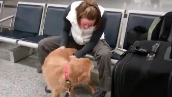 Dog Sees Mom for First time Since Being in Afghanistan