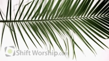 Palm Sunday Lamb - Shift Worship