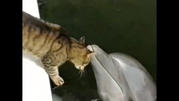 Cat and Dolphin are BFF!
