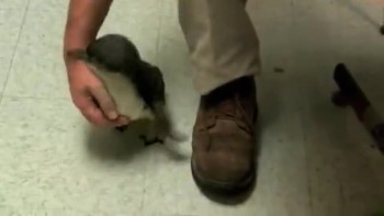 CUTE Penguin gets tickled