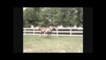Trailer of Horsing Around