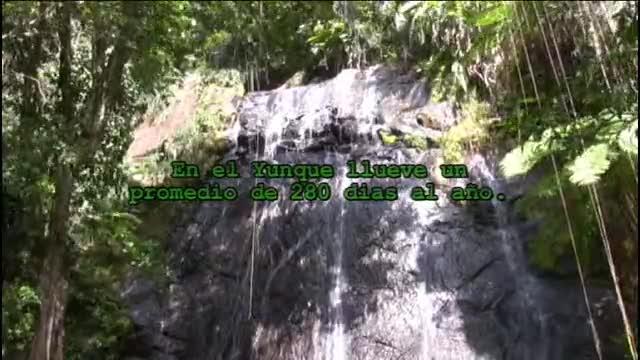 El Yunque 1
