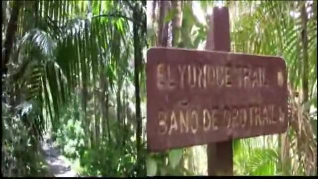 El Yunque II
