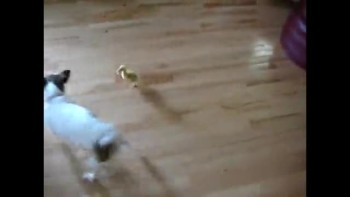Dog vs. Baby Duck