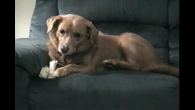 Dog bites his own leg