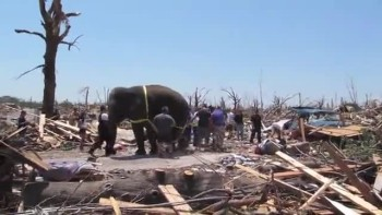 Elephant Helps Clean Up After Joplin Tornado