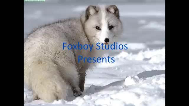 Video Contest #3
