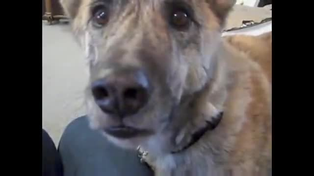 Dog is Teased with his Favorite Foods - Including Bacon