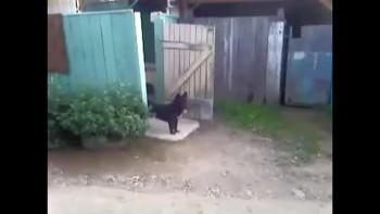 Funny Doorman Dog