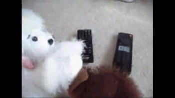 Webkinz Movie Night DISASTER