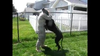 HUGE Dog Welcomes Home His Military Dad, Home From Deployment!