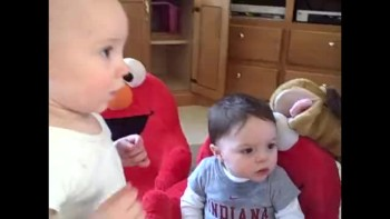 Bad Dog Teaches Babies To Gamble