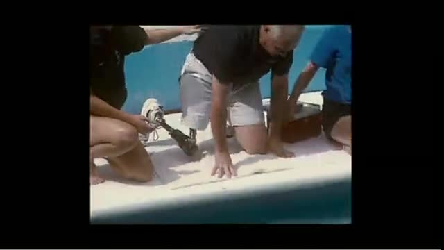 Soldier's Angels – Dolphin Tale Premiere for Wounded Heroes