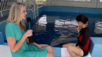 DOLPHIN TALE - Winter interview
