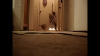 Kittens Turn ON Vacuum While Playing
