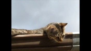 Cat v2011 002