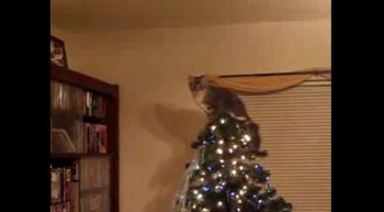 Christmas Tree Leap of Faith