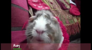 Funny Cute Animals Sing 12 Days of Christmas