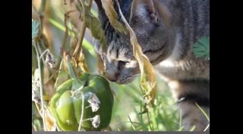 Cat Pictures ani 2012
