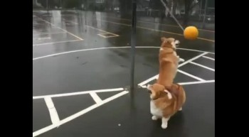 Lovin' the tetherball