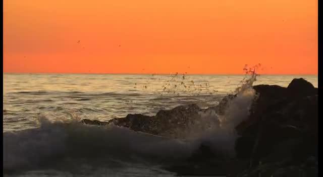 Dolphin Filmed in Sunset