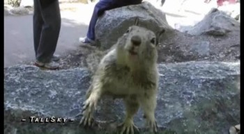Squirrel Jumps Camcorder!