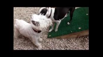 Rowdy Pups