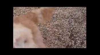 Puptastic Pups