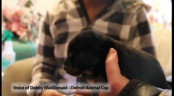 Incredible Puppy Rescue From Underground Pipe