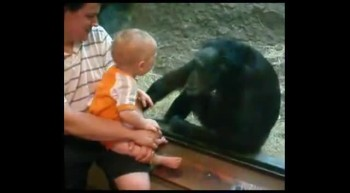 Chimpanzee  Kisses