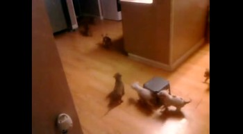 Puppy Stampede!