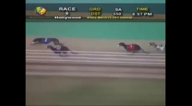 2011 World Classic at Hollywood Florida Greyhound Track