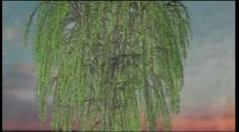 Wish I Was (Willow Tree)