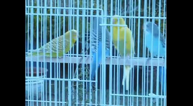 Birds In Thyme