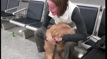 Best of Military Reunions with Man's Best Friend
