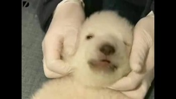 Baby Polar Bear...So Cute!