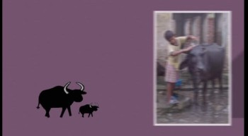 Water Buffalo Provide Income for Years - mygfa.org