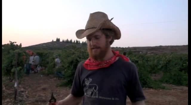The Dance - Vineyards of Israel