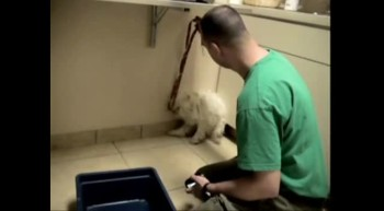 Dog Rescued an Hour Before Euthanasia - MUST SEE REACTION