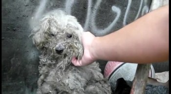 Blind Dog Living in a Trash Pile Gets the Most Beautiful Rescue - The End is Amazing