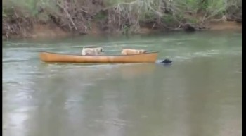 Dog Rescues Two Friends in a Canoe!