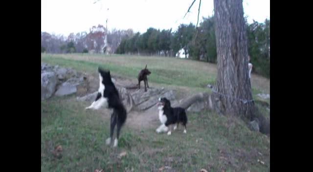Tree Swing Dogs