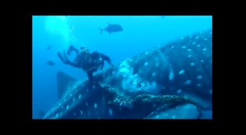 Whale Shark Rescued!!!