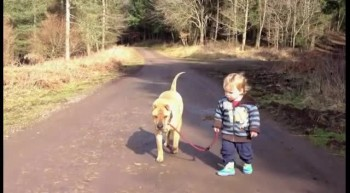 Loyal Dog Waits for Toddler to Play in Puddle - Adorable Best Friends!