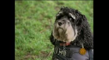 Get a Dog - Ben Stein