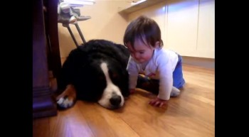 Dog and Baby Love on One Another